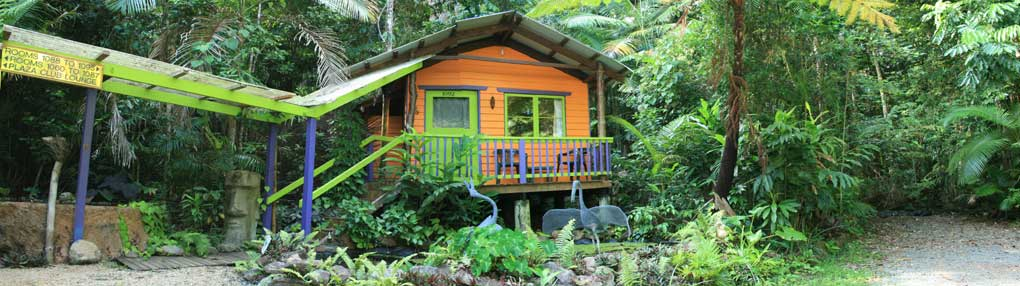 accommodation in rainforest bungalow in daintree rainforest