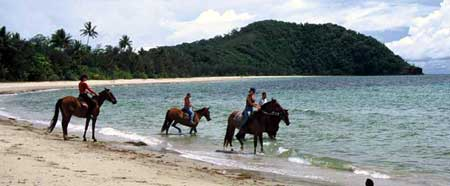 beach horse rides in cape tribulation on the daintree coast