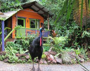 daintree accommodation in rainforest bungalow