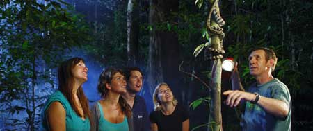 guided nightwalk in the daintree rainforest in cape tribulation